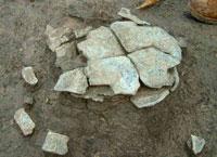 河内化石群
