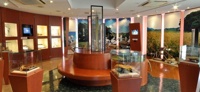 種子島赤米館展示室